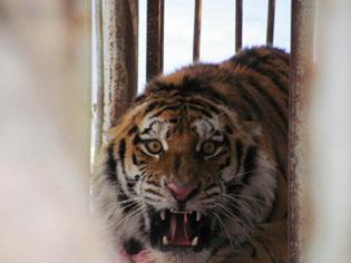 (c) Центр реабилитации диких животных «Утес»
