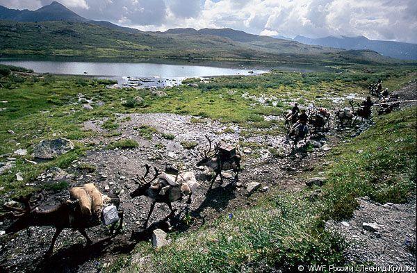 © WWF России / Леонид Круглов