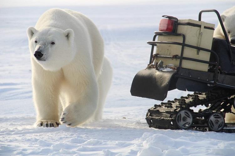 Фото:(C) WWF России
