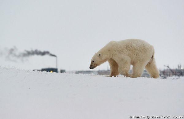 © Максим Деминов / WWF России