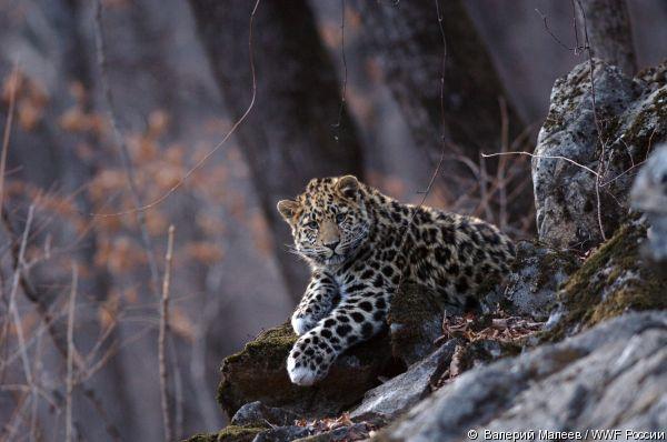 © Валерий Малеев / WWF России