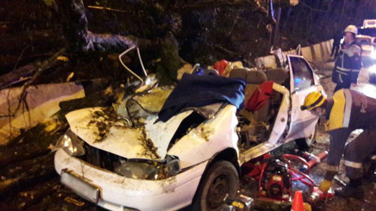 ВСочи cотрудники экстренных служб вызволили людей изавтомобиля, накоторый упало дерево